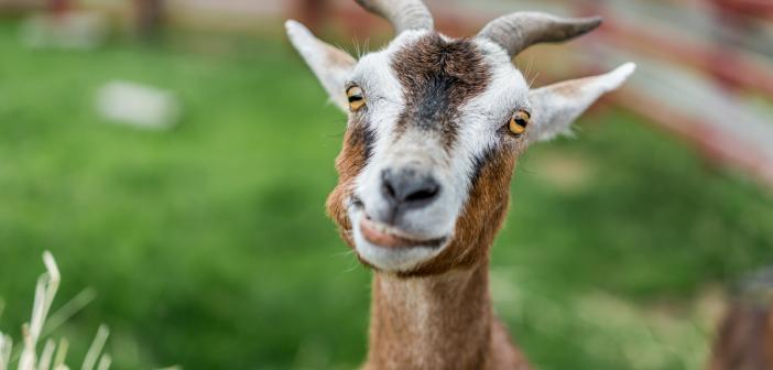 Mark Zuckerberg dal svojej koze meno Bitcoin